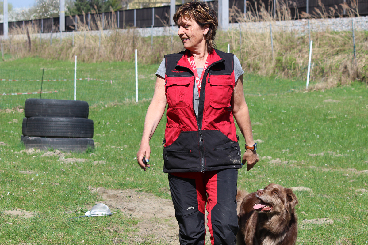 Trick Training For Agility Dogs